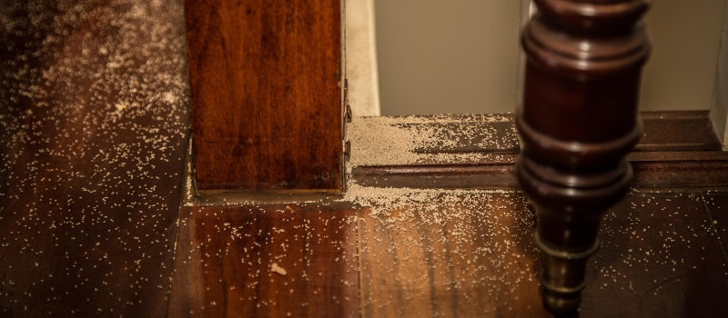 Signs of dry wood termites