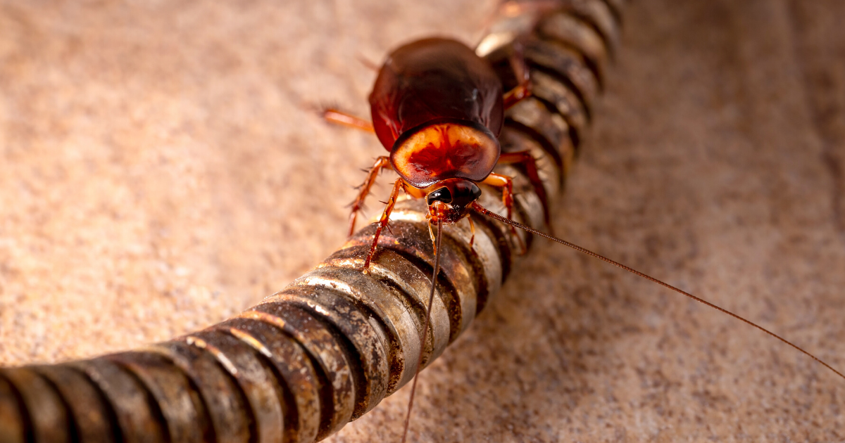 Types of Household Pests