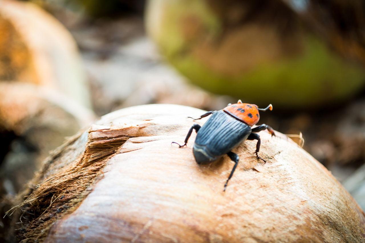 Weevil bugs 2021
