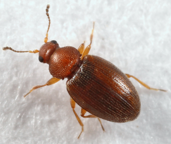 What's a small brown bug?