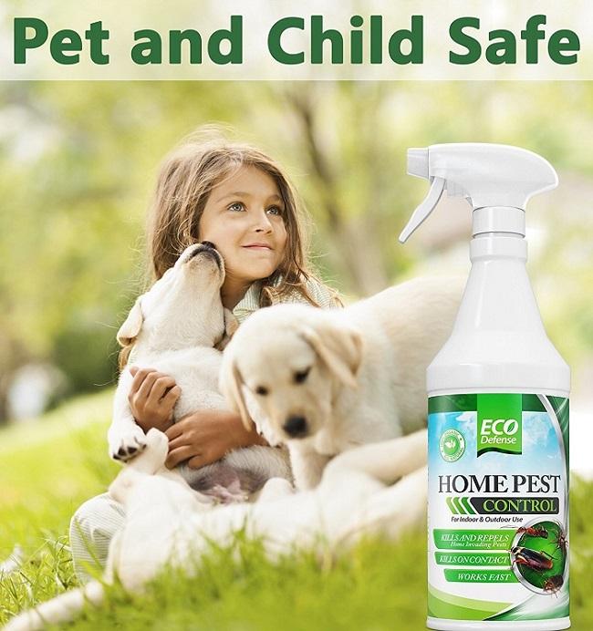 best pet safe ant killers