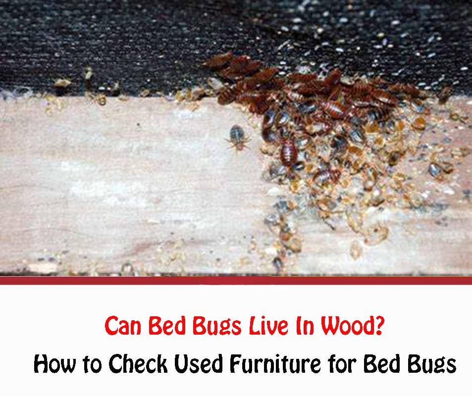 Can Bed Bugs Live In Wood