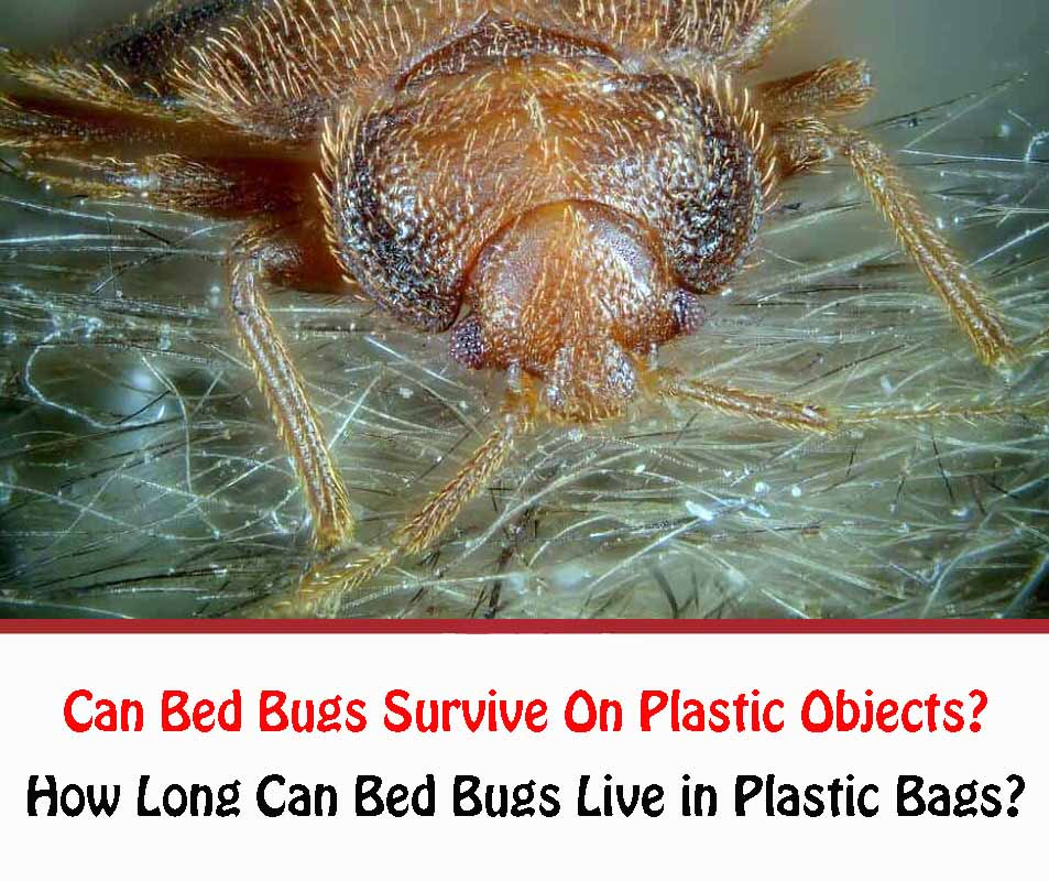 Can Bed Bugs Survive On Plastic Objects