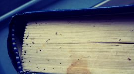 Can Bed Bugs Live On Books?
