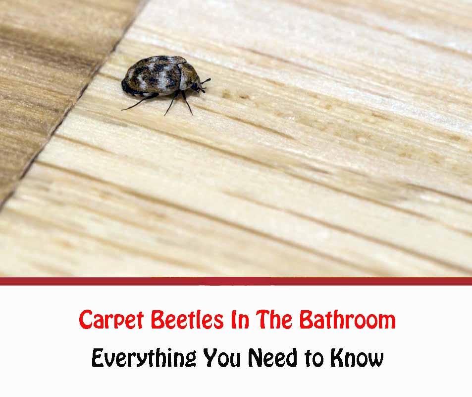 Carpet Beetles In The Bathroom