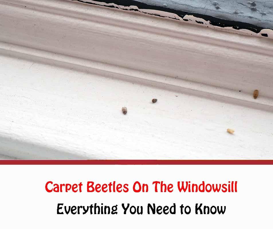 Carpet Beetles On The Windowsill