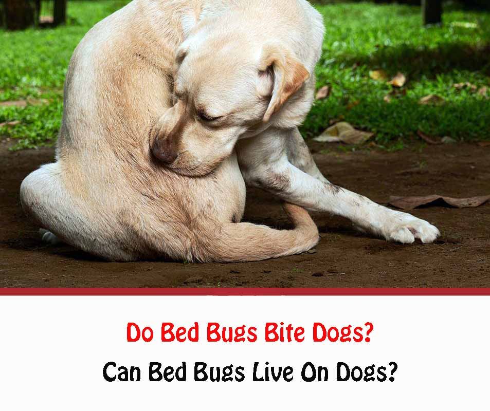 Do Bed Bugs Bite Dogs