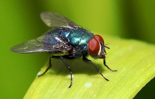 Do Flies Sleep At Night And For How Long