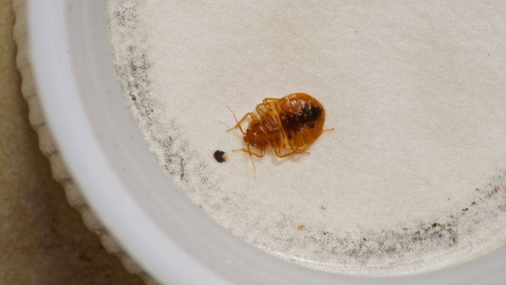 Do bed bugs drink water?