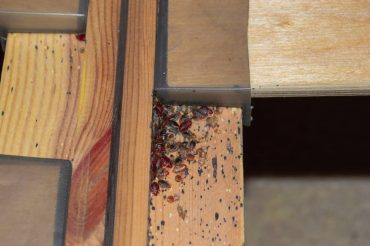 Can Bed Bugs Live In Wood?