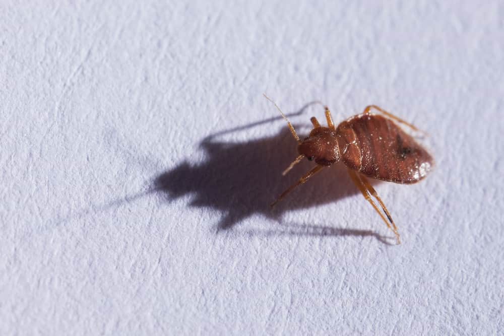 Do the bed bugs like cold or heat - Image By servicemaster