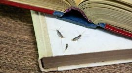 Home Remedies to Get Rid of Silverfish In Bathroom