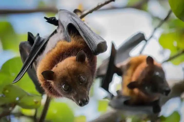 How Do Bats Attack