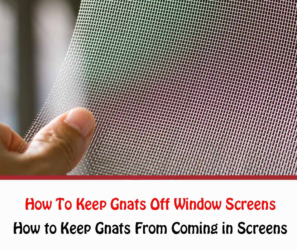 How To Keep Gnats Off Window Screens