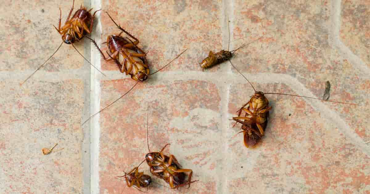 How does diatomaceous earth kill roaches