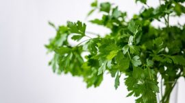 How to Get Rid of Bugs on Cilantro Naturally