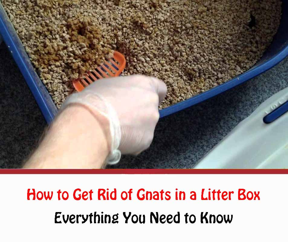 How to Get Rid of Gnats in a Litter Box Naturally