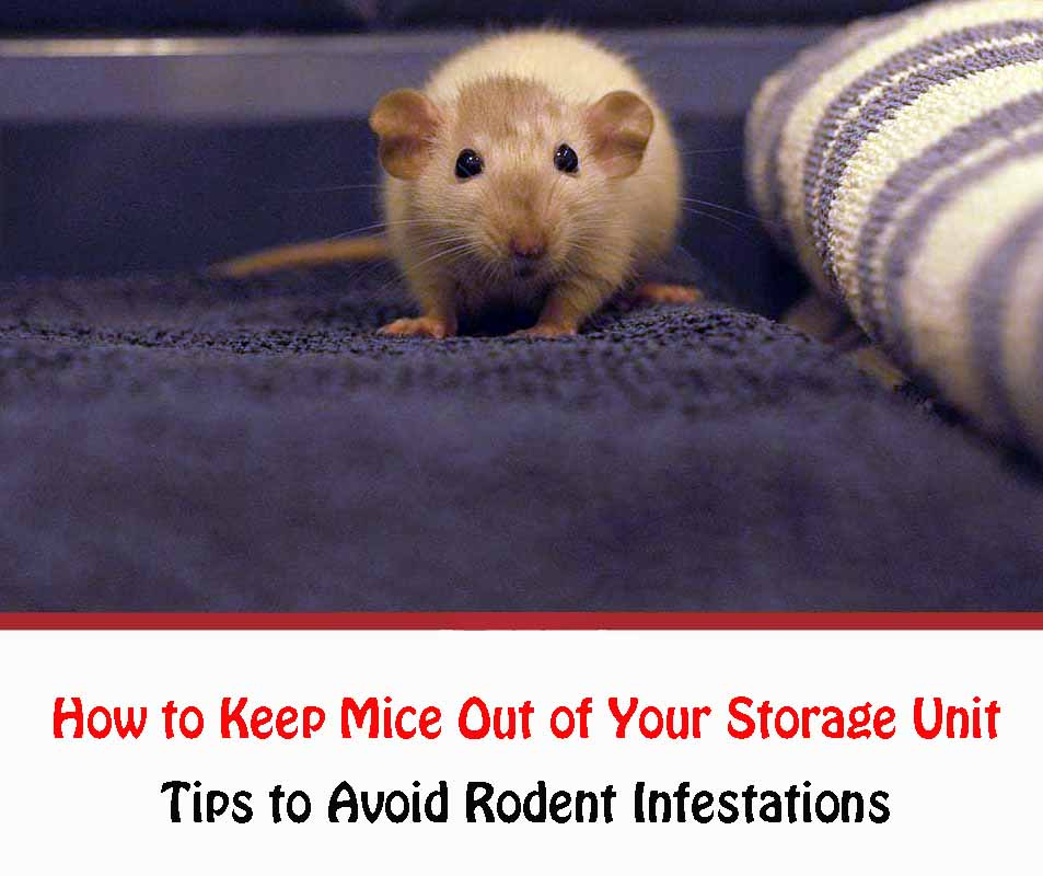 How to Keep Mice Out of Your Storage Unit 2021