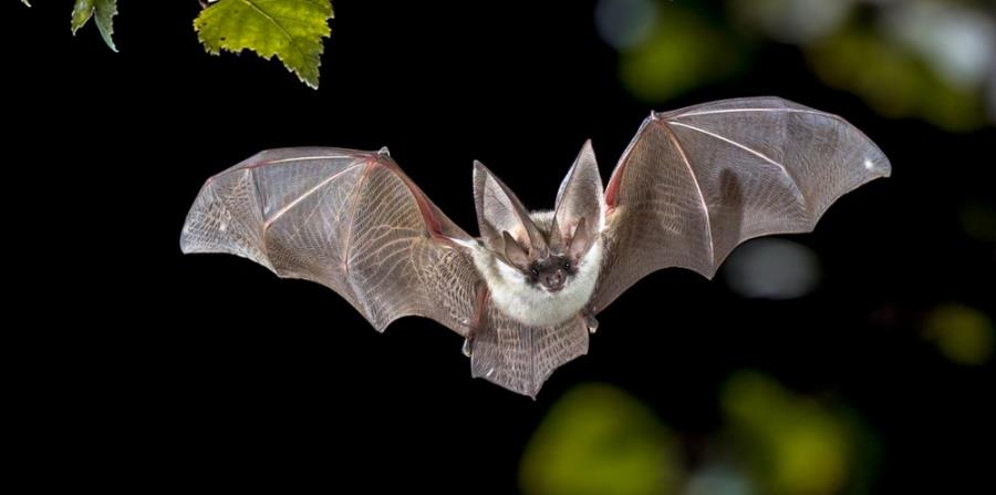 How to Keep the Bats away from Your Home