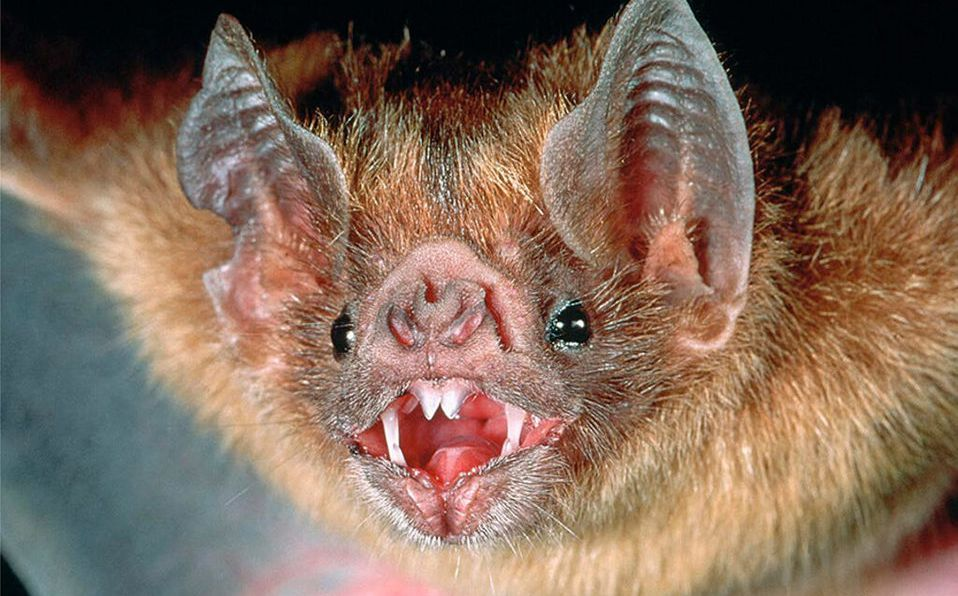 How to get rid of bats naturally 2021