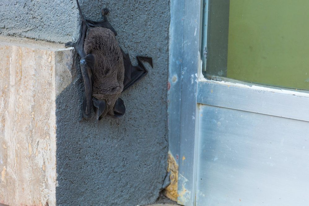 How to scare bats away
