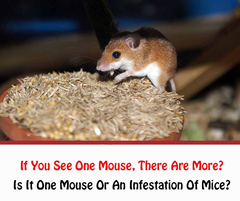 If You See One Mouse There Are More