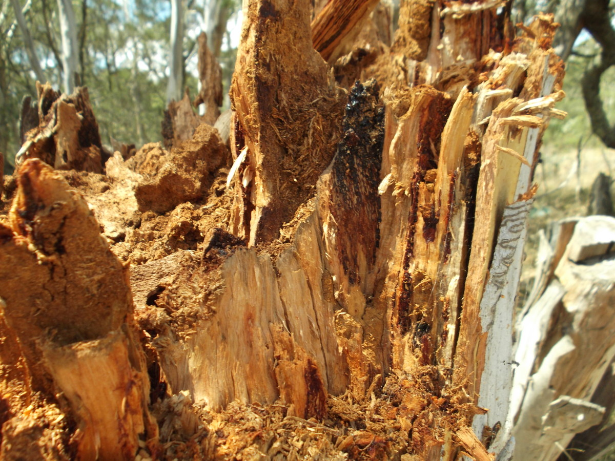 Signs of Termite Infestation in Trees