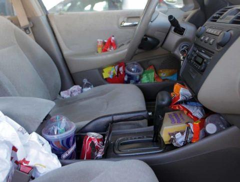 What Causes Carpet Beetles in Car