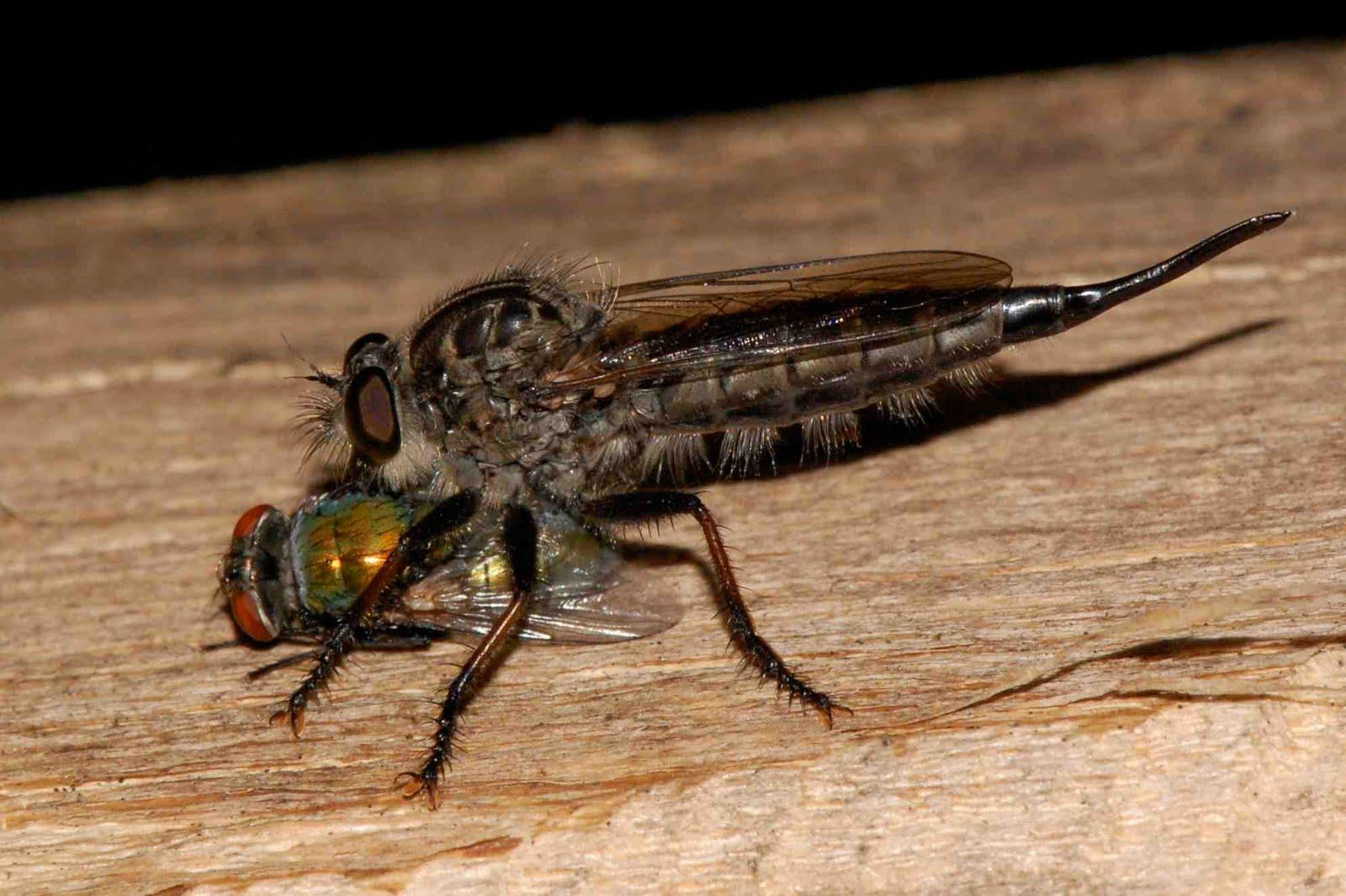What Do Flies Eat?