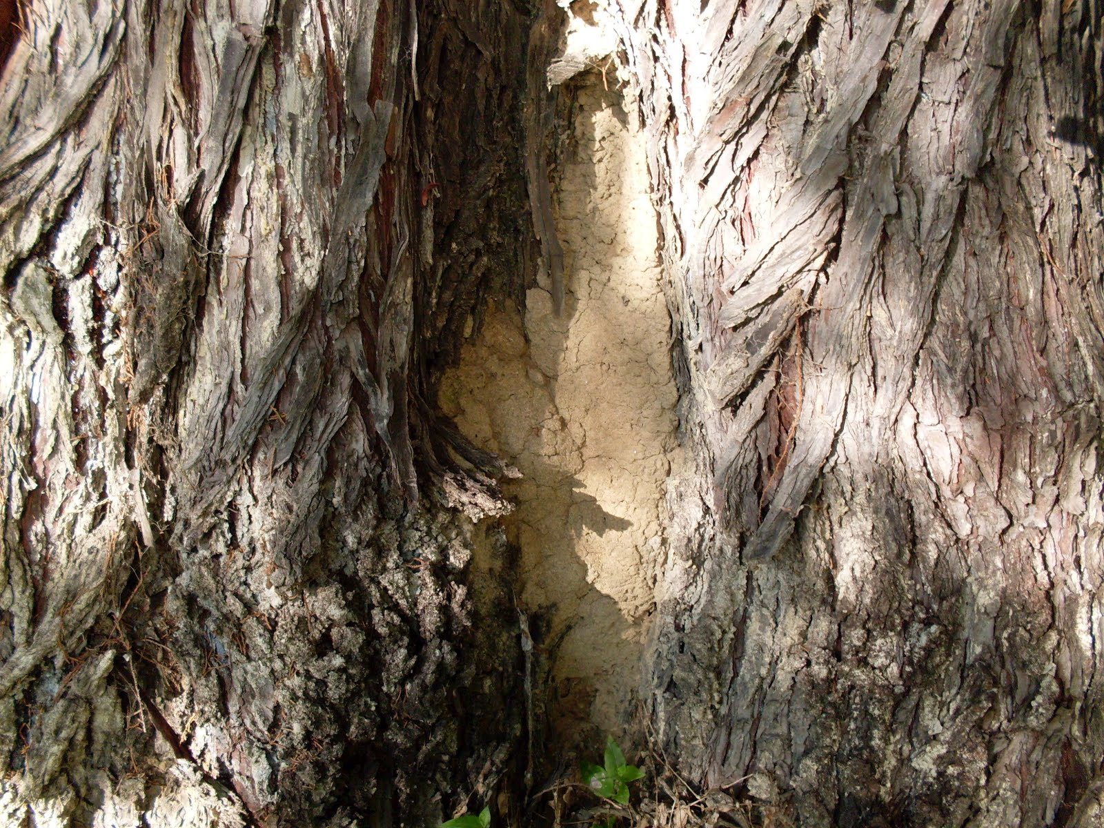 What Happens If Termites Make a Tree Hollow