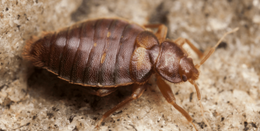 Can Bed Bugs Survive In Cold Temperatures?