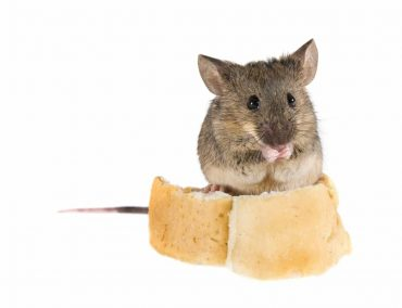 How to Keep Mice Out of Your Storage Unit