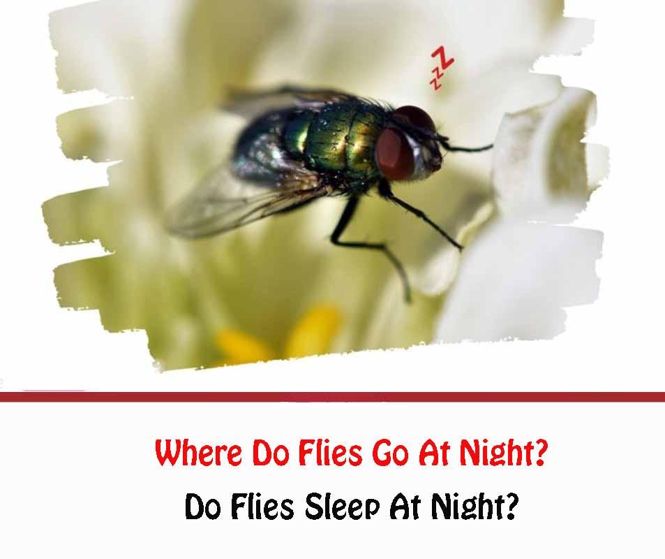 Where Do Flies Go At Night
