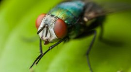 Why Do Flies Rub Their Hands Together?
