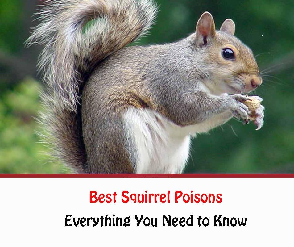 Best Squirrel Poisons 2021