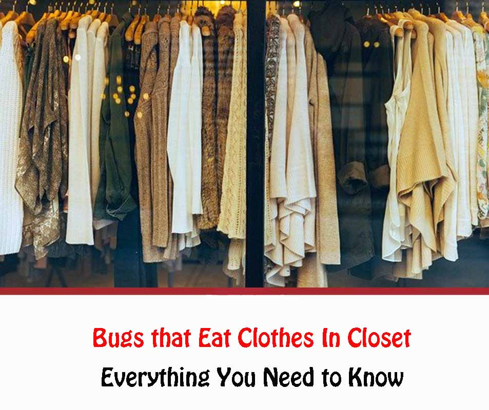 Bugs that Eat Clothes In Closet