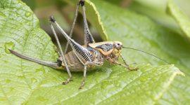 How Do Crickets Breathe?