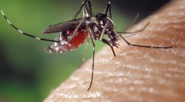 At What Temperature Do Mosquitoes Die?