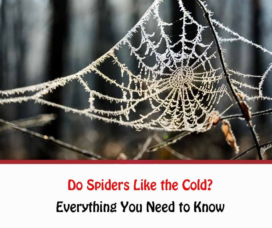 Do Spiders Like the Cold?