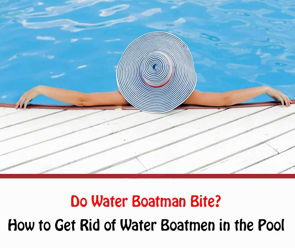 Do Water Boatman Bite 2021?