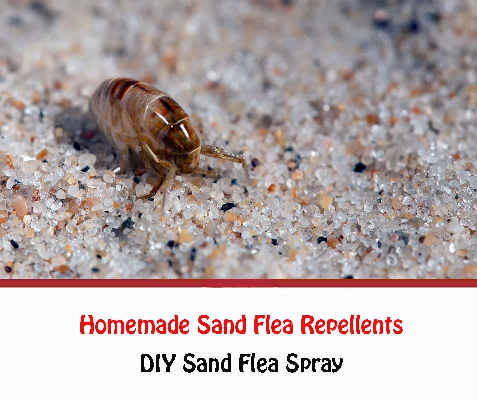 Homemade sand flea repellents