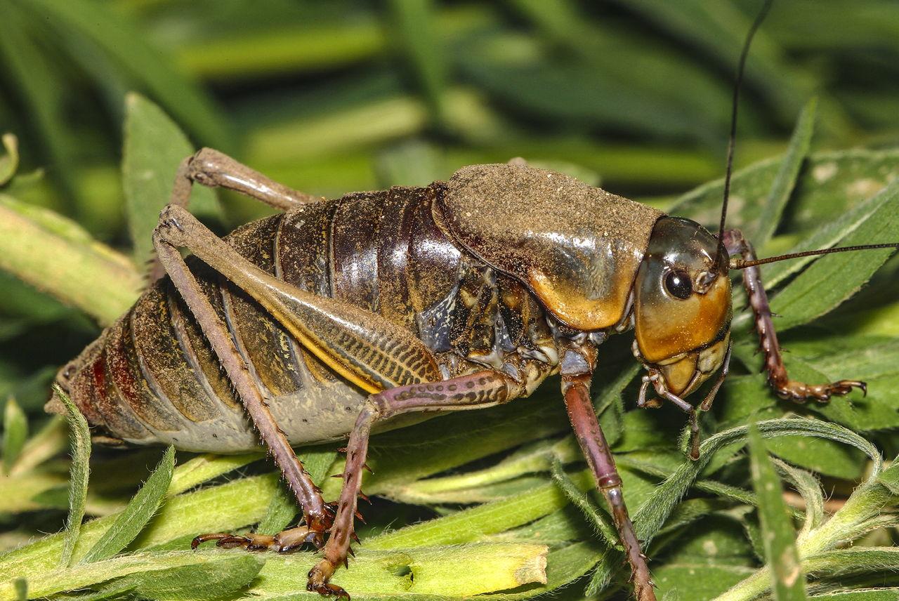 How Do Crickets Breathe