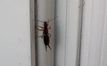 How to Keep Bugs Away From Front Door