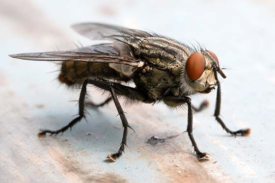 How does a fly trap work