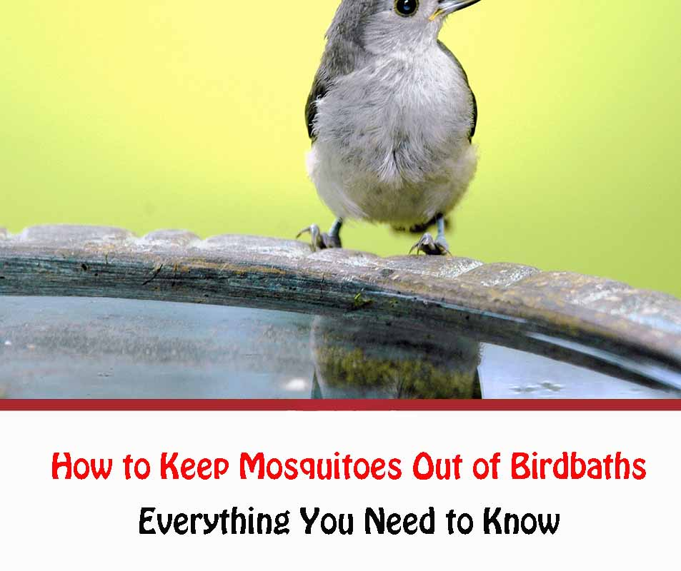How to Keep Mosquitoes Out of Birdbaths 2021