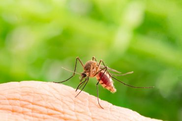 How to Get a Mosquito Out of Your Room