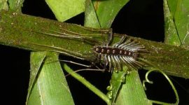 How to Get Rid Of Centipedes in House Plants Naturally