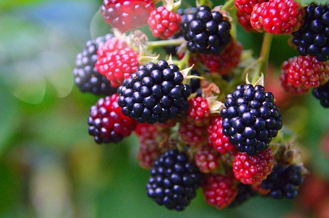 How to prevent worms in blackberries