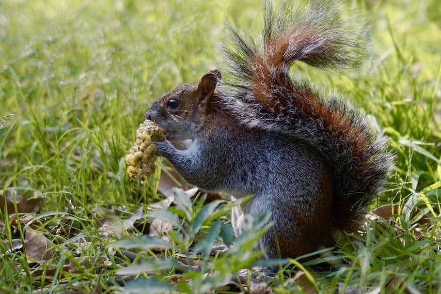 How to use Squirrel Poisons For Better Effects