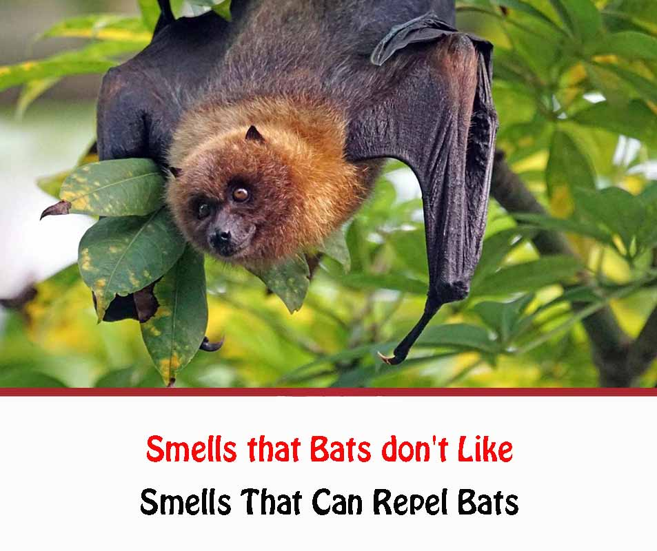 Smells that Bats don't Like